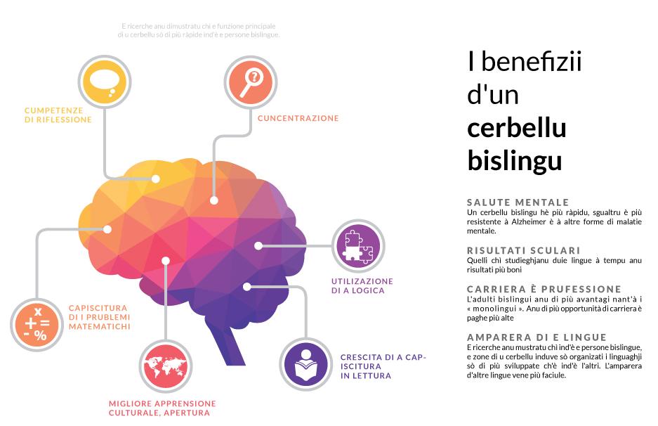cerbellu-bislingu-infographie