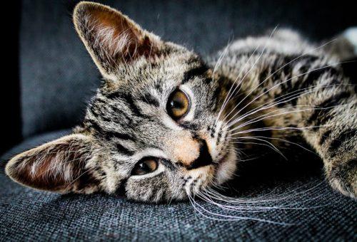 comment aider les animaux quand on est très occupé